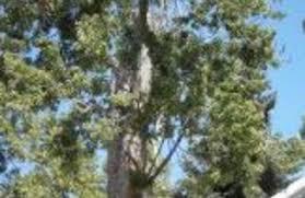 ross tree company denver co 80223 yp