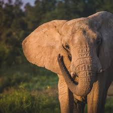 about us the elephant sanctuary in tennessee