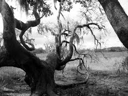 another creepy tree by mollykubes539 on deviantart