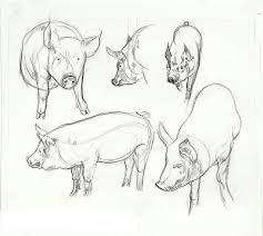 29 best animal anatomy images on pinterest animal anatomy