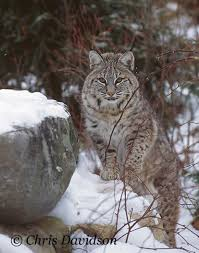 New Jersey wildlife tours images Njdep division of fish wildlife mammals in new jersey jpg