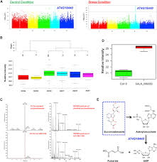 mapping the arabidopsis metabolic landscape by untargeted