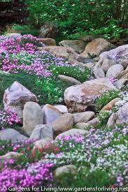 rock garden creeping phlox gardening ideas u0026 tips pinterest