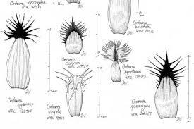botany and herbarium burke museum