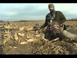 goose hunting chisel plowed fields youtube