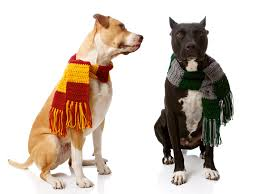 dog clothes for halloween set of gryffindor u0026 slytherin house scarves for dogs harry potter