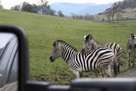 Oregon wildlife images Oregon road trip and the wildlife safari savvy sassy moms jpg