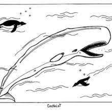Humpback Whale Coloring Pages Hellokids Com Whale Color Page