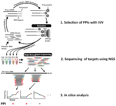 ijms free full text towards personalized medicine mediated by