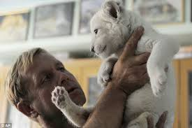 zoo keepers shock ultra rare white lion cubs
