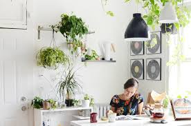 Best Houseplants 8 Of The Best House Plants For The Kitchen Kitchn