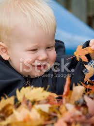 baby smiling in a pile of leaves stock photos freeimages com
