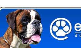 affenpinscher zucht deutschland dog breeders and kennels in europe eurobreeder com