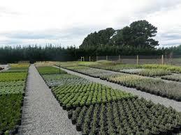 native plants christchurch greenlinc nursery u0026 landscaping services weedons selwyn