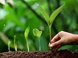 environment essay in english for students and children simple