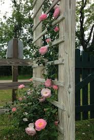 204 best rose rosier images on pinterest flowers plants and