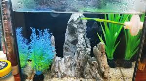Home Blue Fish Ecoqube C Home Of Blue The Betta Fish Youtube