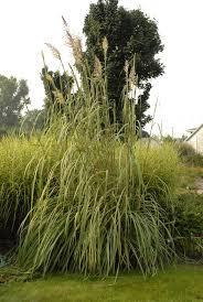 pas grass hardy thetreefarm