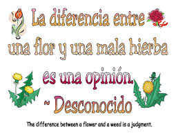 quotes about love in spanish with english translation google image result for http www sparkenthusiasm com images