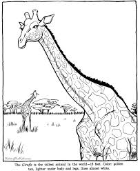 giraffe coloring sheet zoo animals pages 2 color
