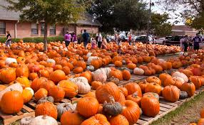 Pumpkin Patch St Louis Mo by 7 Best Pumpkin Patches In New Orleans In 2016