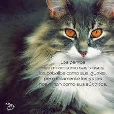 imagenes de gatitos sin frases img frases de gatos 21209 paso 2 600 jpg
