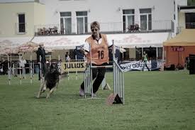 belgian shepherd uk wbsds