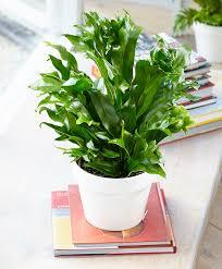 10 houseplants that are easy to grow u2013 homestead growers hgtv
