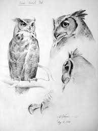 1000 ideas about owl sketch on pinterest owl drawings sketching