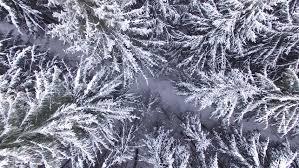 free stock of snow winter tree