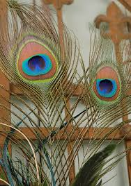 Peacock Feather Home Decor Peacock Feathers And Artificial Peacocks