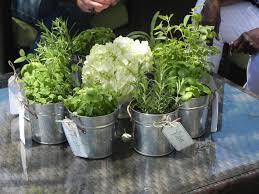 Tin Buckets For Centerpieces by Using Metal Buckets For Plants Veggies Or Fruit Garden Shower