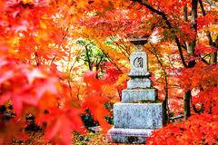 autumn colors in eikando tempel kyoto kansai japan stock foto