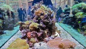 Marine Aquascaping Techniques 6 Tips For Choosing The Right Sized Tank For Saltwater Fish