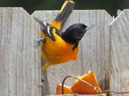 readers respond with superior antidotes for backyard bird problems
