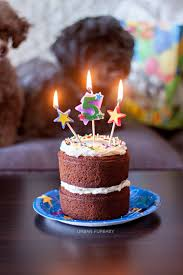 birthday cake for dogs bakes dog birthday carrot cake with neufchâtel cheese