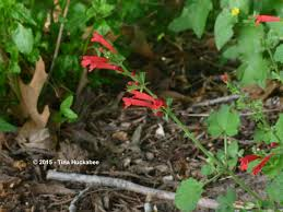 native plants natural areas notebook wildflower wednesday my gardener says u2026