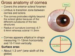 Fundamentals Of Anatomy And Physiology 6th Edition Anatomy And Physiology Of Cornea