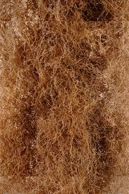 native plants of india digging deep reveals the intricate world of roots u2013 proof