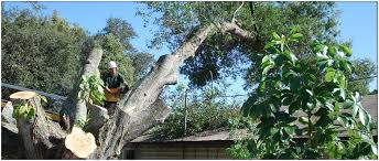 ken s tree service tree service for west central florida