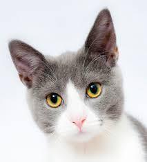 Cat Meme Generator - cat meme generator cats