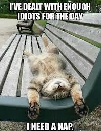 Sleepy Cat Meme - tired cat day nap funny pinterest cat cat comics and humor