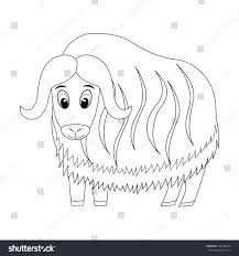 colorless funny cartoon musk ox vector stock vector 706758184