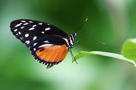 close up of butterfly on plant free stock photo