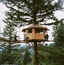 Treehouse Examples Tree House Designs And Plans For Adults Tiny House