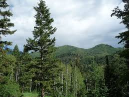 the firs the best trees national forest foundation