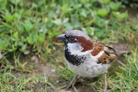 Sparrow by Welcome To Where Have All The Sparrows Gone Where Have All The