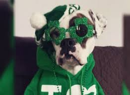 10 dogs dressed up for st patrick u0027s day pophangover
