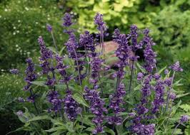 oaktown native plant nursery native plants of louisiana home design inspirations
