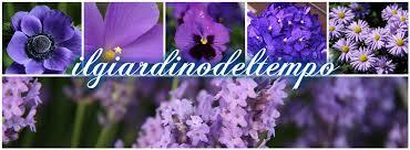 fiori viola linguaggio dei fiori di colore viola il giardino tempo